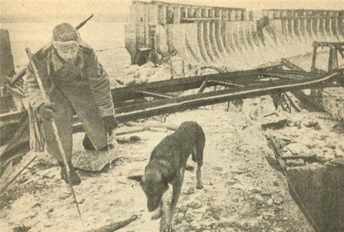 Четвероногие солдаты: собаки в армии - фото №4