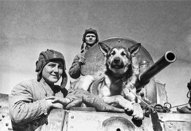 Четвероногие солдаты: собаки в армии - фото №3