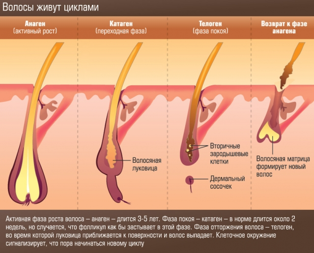 Как замедлить рост волос на лице и теле (+ВИДЕО) - фото №1