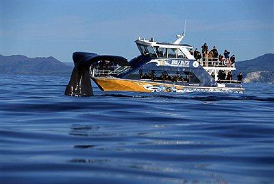 Почему вам стоит поехать в Новую Зеландию - фото №9