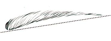Брови: как найти идеальную форму - фото №2