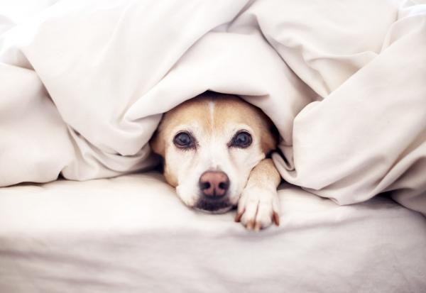 собака на диване фото