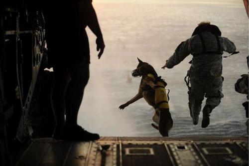 Четвероногие солдаты: собаки в армии - фото №1