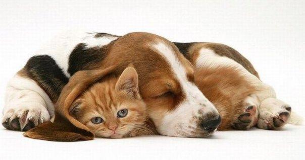 Витамины для кошек и собак: нужны ли они? - фото №4