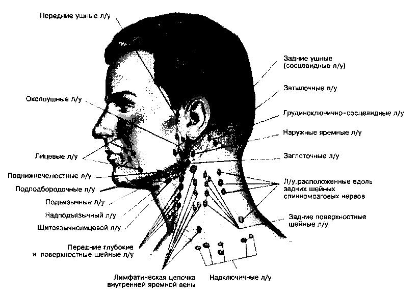 Как омолодить лицо с помощью массажа - фото №2