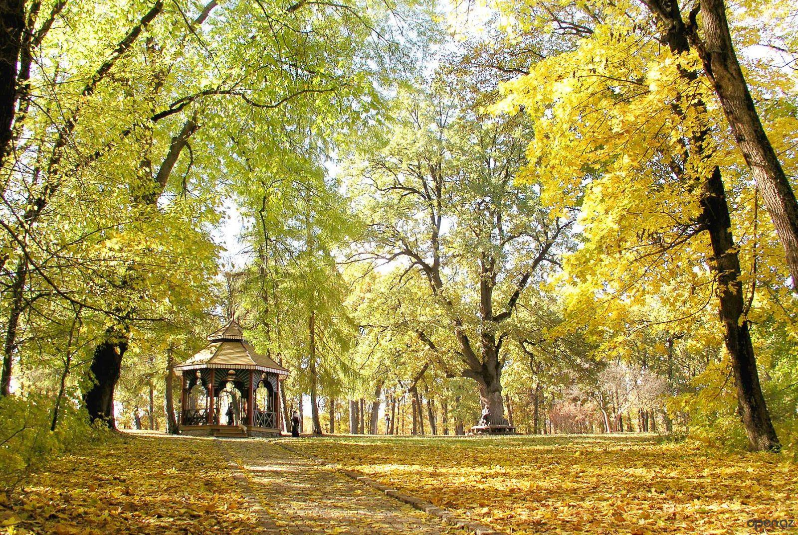 Лучшие дендропарки Украины для прогулок осенью - фото №4