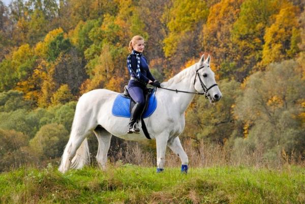 прогулка на лошади фото