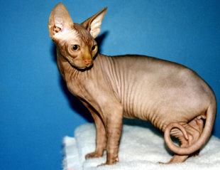 Домашние животные, которые не вызывают аллергии - фото №2