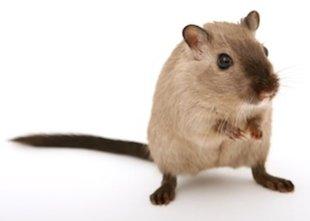 Домашние животные, которые не вызывают аллергии - фото №4