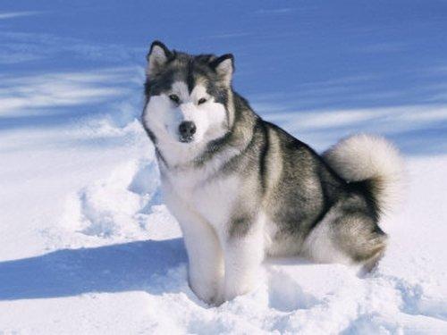 Топ 5 самых опасных пород собак - фото №4