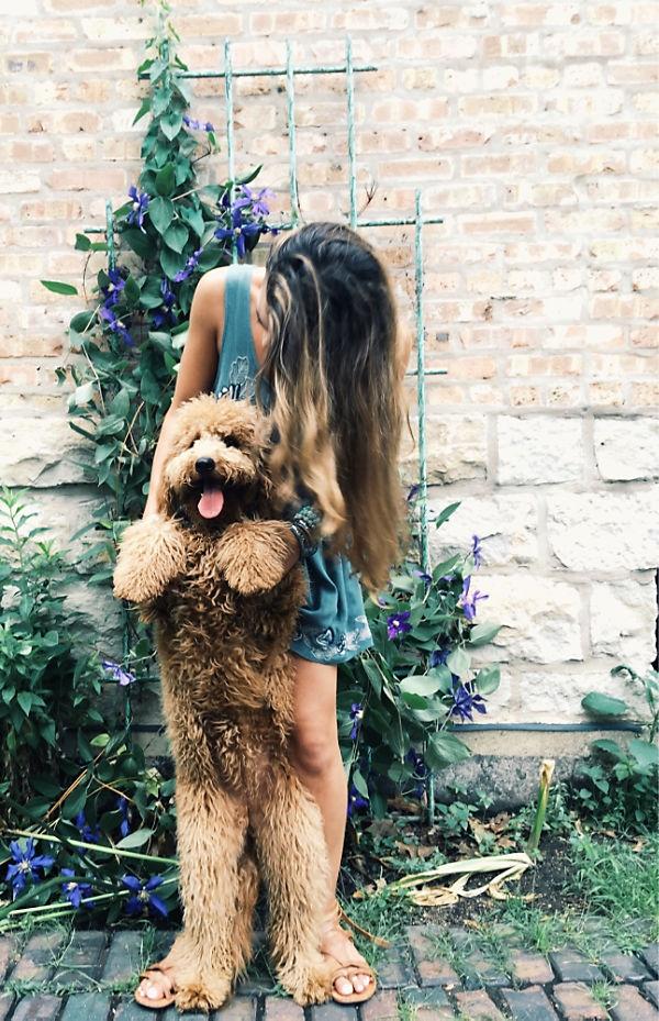 Как правильно выбрать собаку и действительно ли она нужна тебе? - фото №7