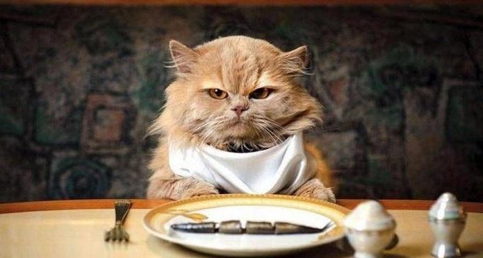Как и чем кормить беременную кошку или собаку - фото №1
