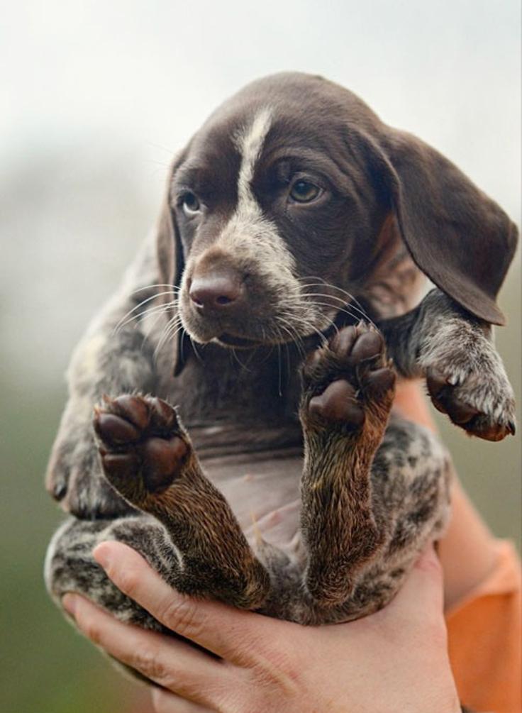 Как правильно выбрать собаку и действительно ли она нужна тебе? - фото №10