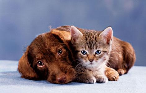Витамины для кошек и собак: нужны ли они? - фото №5