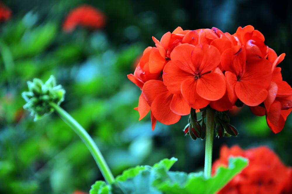Дышать станет легче: кислородные растения, которые должны быть в доме - фото №6