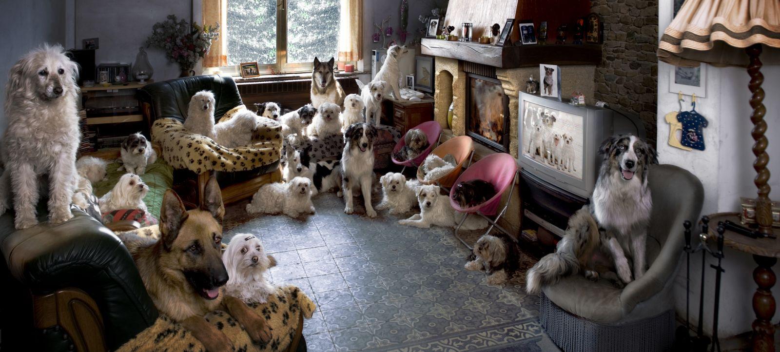 Гостиницы для домашних животных: как выбрать? - фото №1