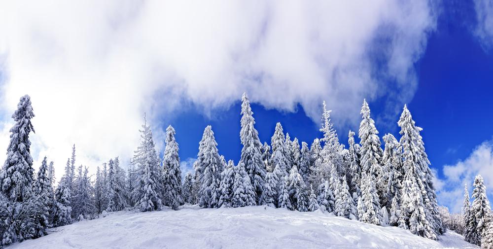 Куда поехать кататься на лыжах и сноуборде в Украине: Славское - фото №5