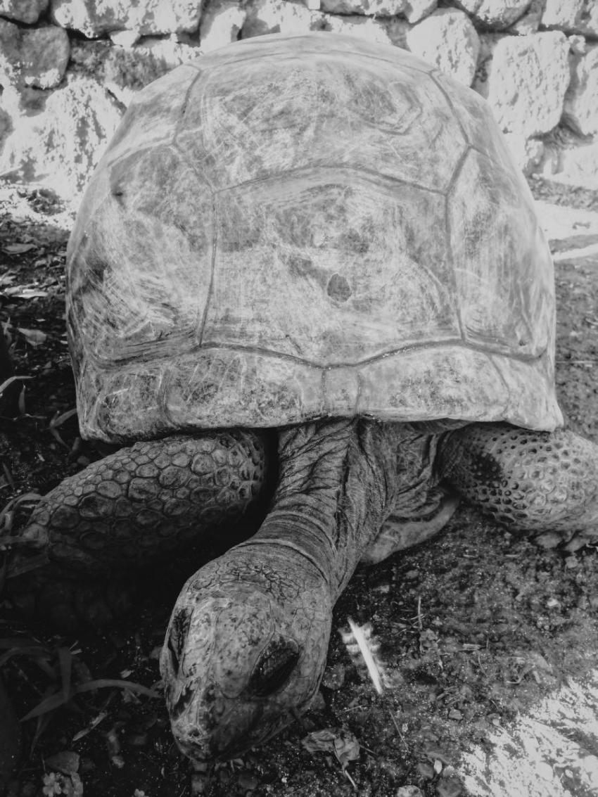 Остров Маврикий: стоит ли лететь больше 10 часов (опыт редакции) - фото №9