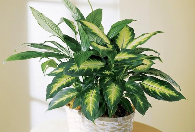 Какие растения нельзя держать дома: скрытая угроза здоровью - фото №1