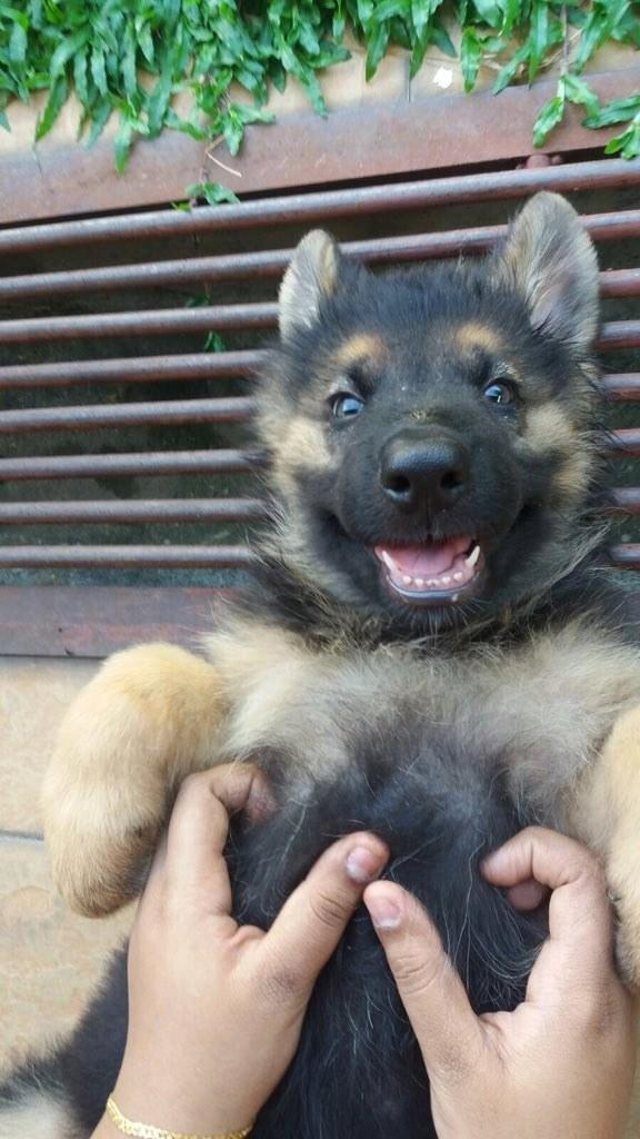 Как правильно выбрать собаку и действительно ли она нужна тебе? - фото №14