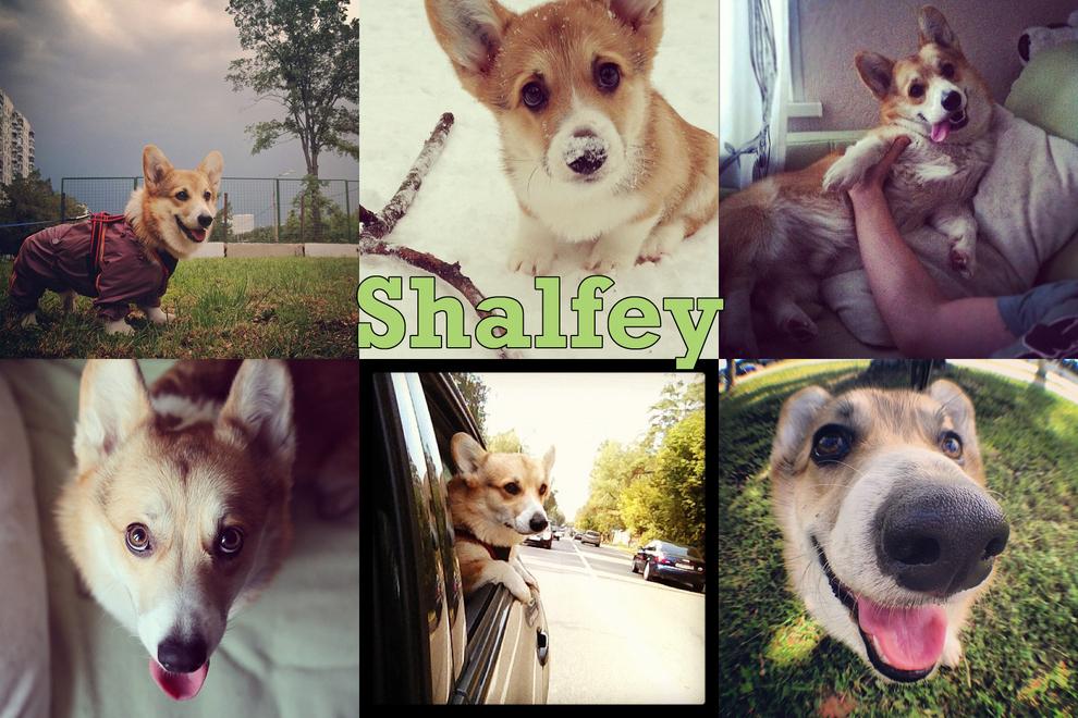 Самые забавные животные из Instagram - фото №6