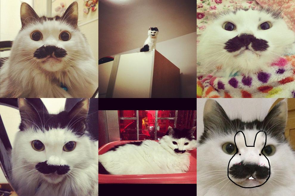Самые забавные животные из Instagram - фото №8