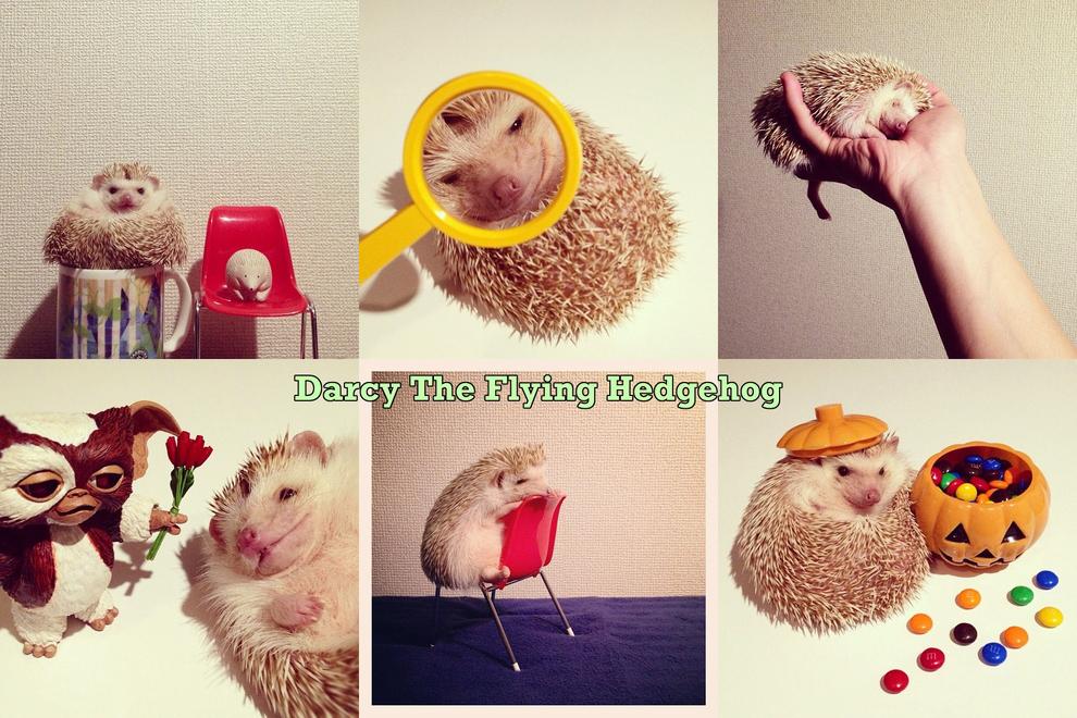 Самые забавные животные из Instagram - фото №3