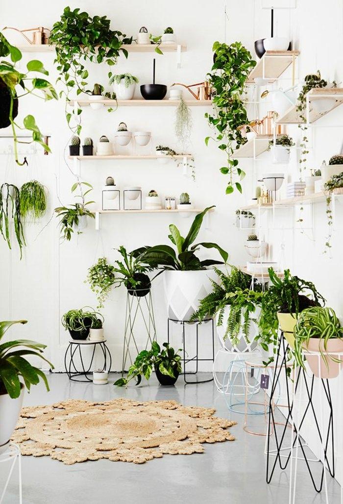 Домашняя оранжерея: выбираем красивые и полезные комнатные растения (очищающие, бактерицидные, увлажняющие) - фото №11
