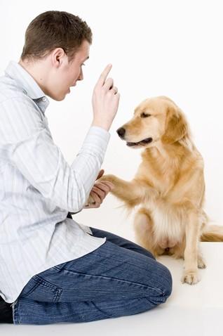 Как выбрать хорошего тренера для собаки - фото №2