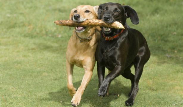Как правильно тренировать собаку - фото №2
