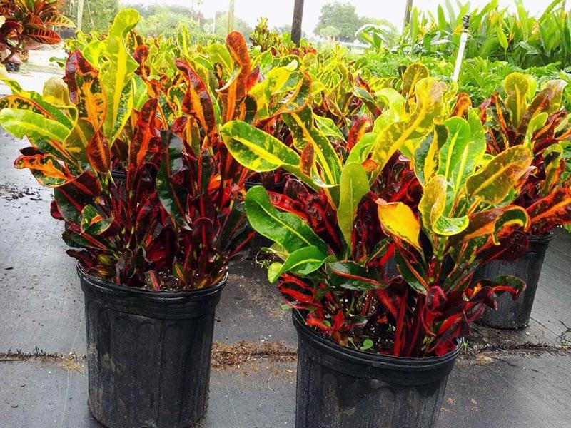 Какие растения нельзя держать дома: скрытая угроза здоровью - фото №4