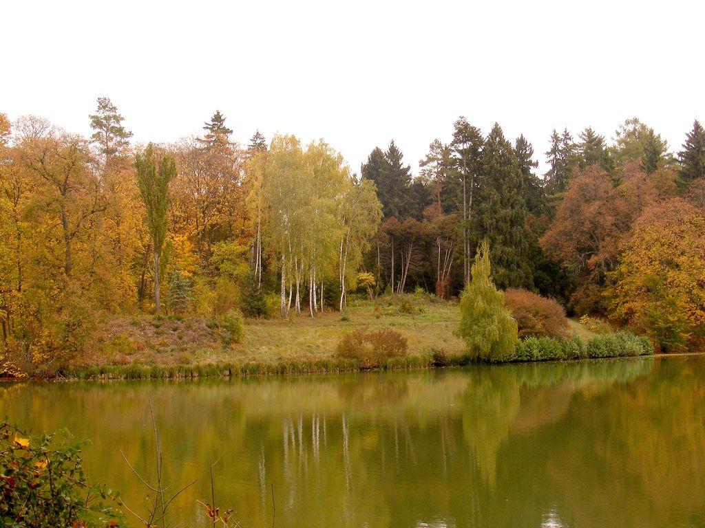 Лучшие дендропарки Украины для прогулок осенью - фото №5