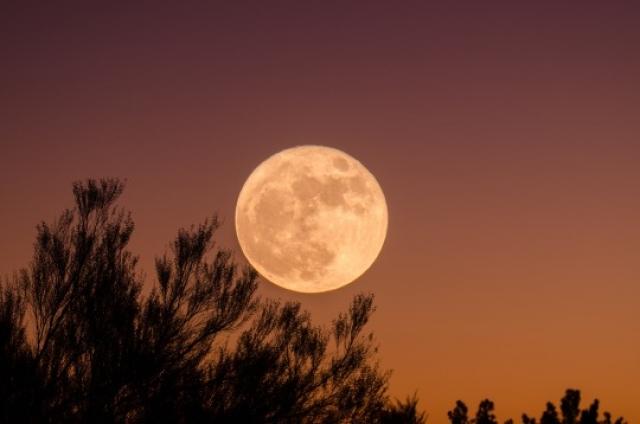 Урожайная Луна 2017