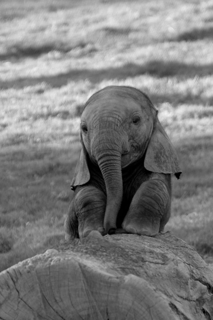 глобальное потепление природа слон