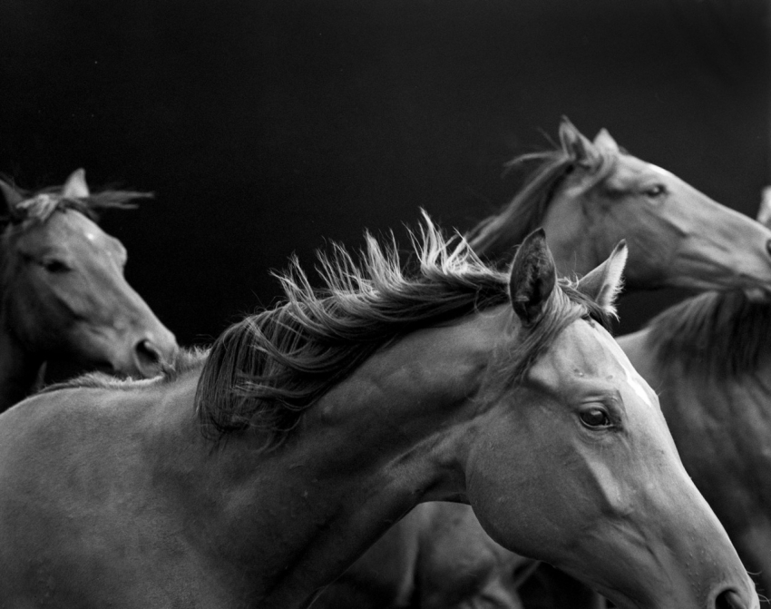 цирк без животных  дикая природа лошади