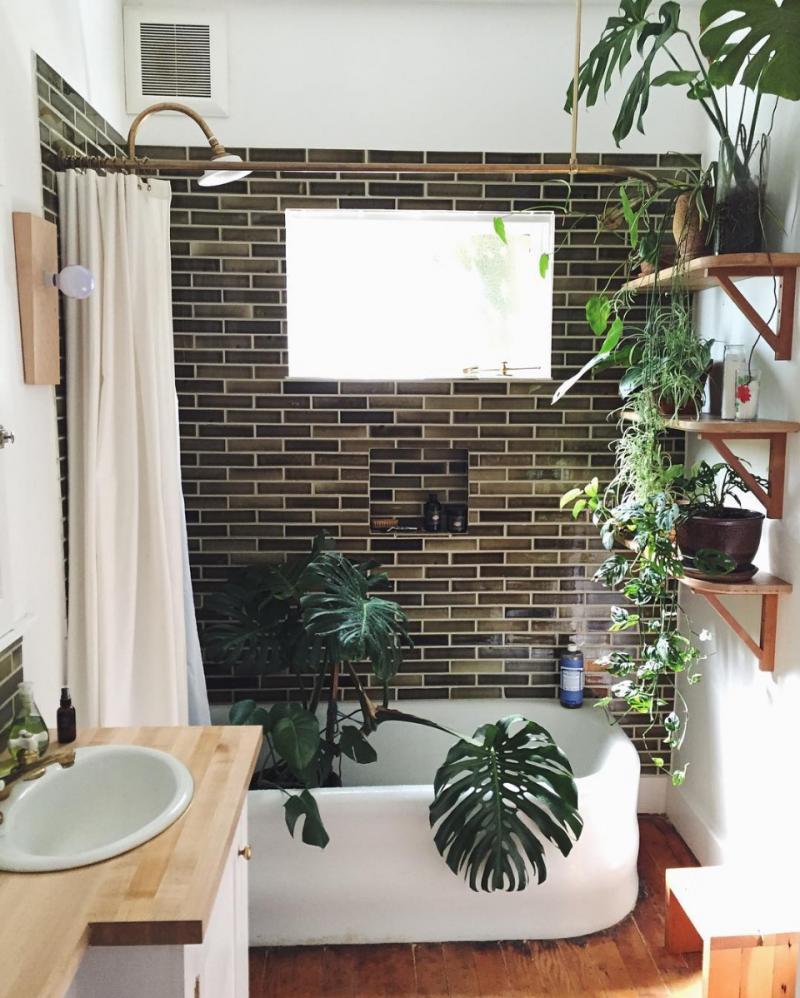 ванная комната растения