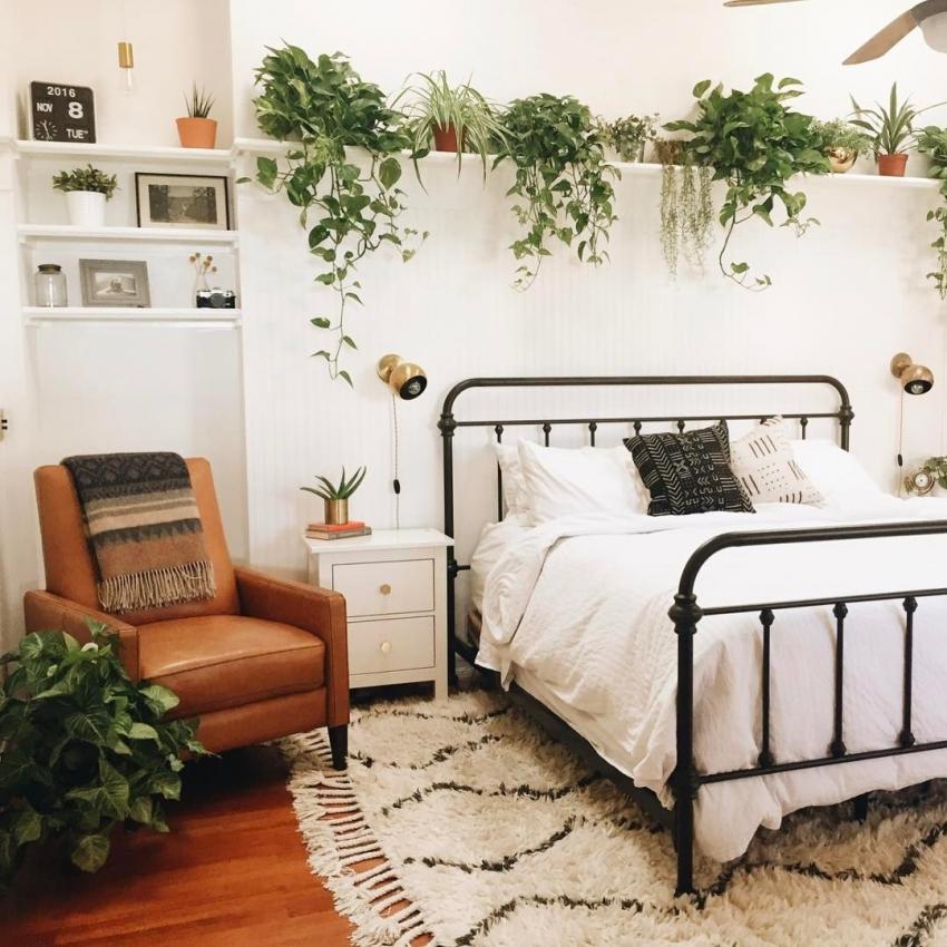 домашние растения комнатные растения