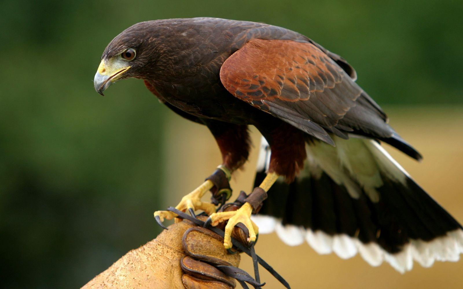 Экзотические животные в доме: птицы - фото №2
