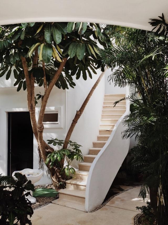 Домашняя оранжерея: выбираем красивые и полезные комнатные растения (очищающие, бактерицидные, увлажняющие) - фото №2