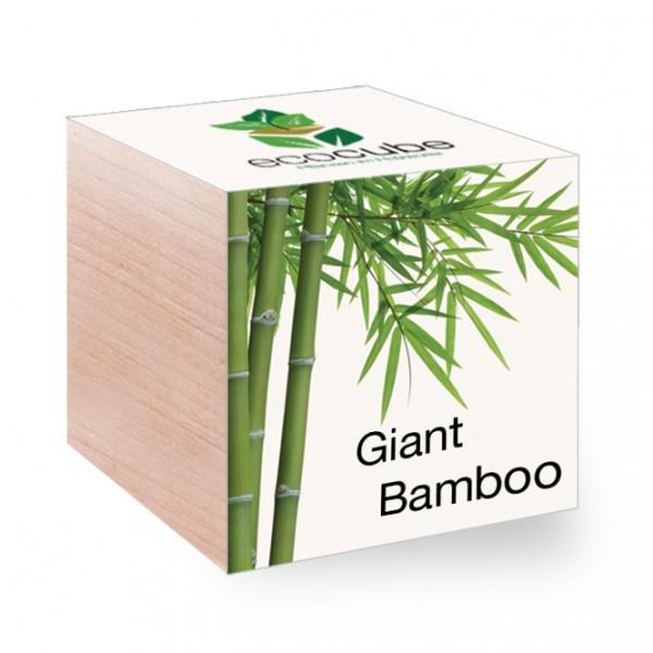 Домашняя оранжерея: выбираем красивые и полезные комнатные растения (очищающие, бактерицидные, увлажняющие) - фото №15