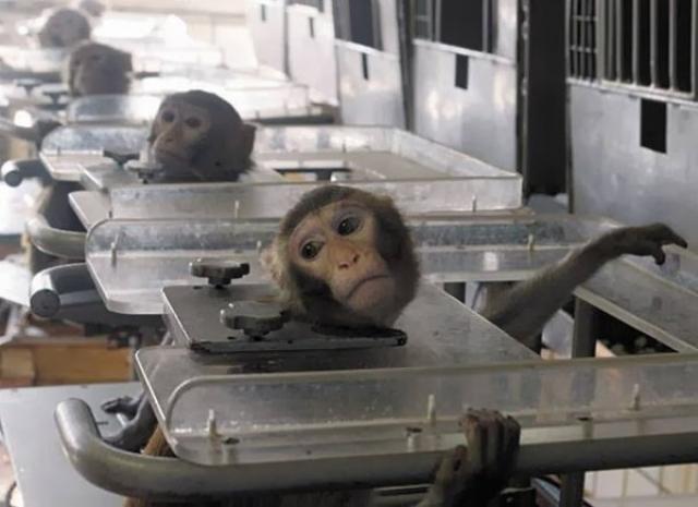 тестирование косметики на животных вивисекцияё