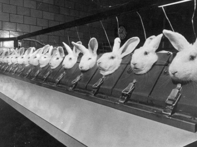 тестирование косметики на животных вивисекция