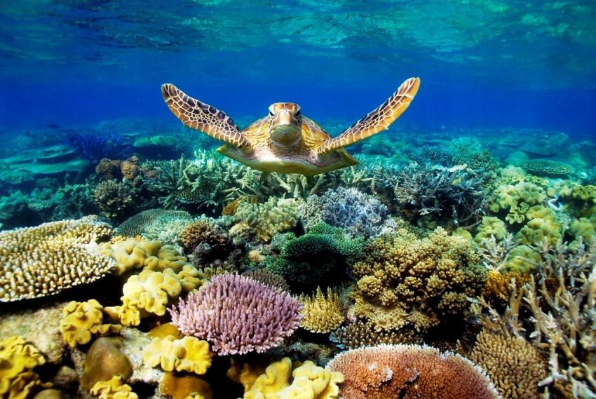 Большой Барьерный риф (Great Barrier Reef)