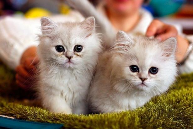 ярмарка котов