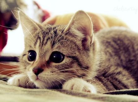 Кот не работает, кот ест - фото №3