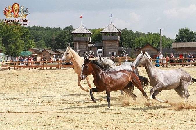 куда пойти на выходных 18-19 июля: выставка лошадей