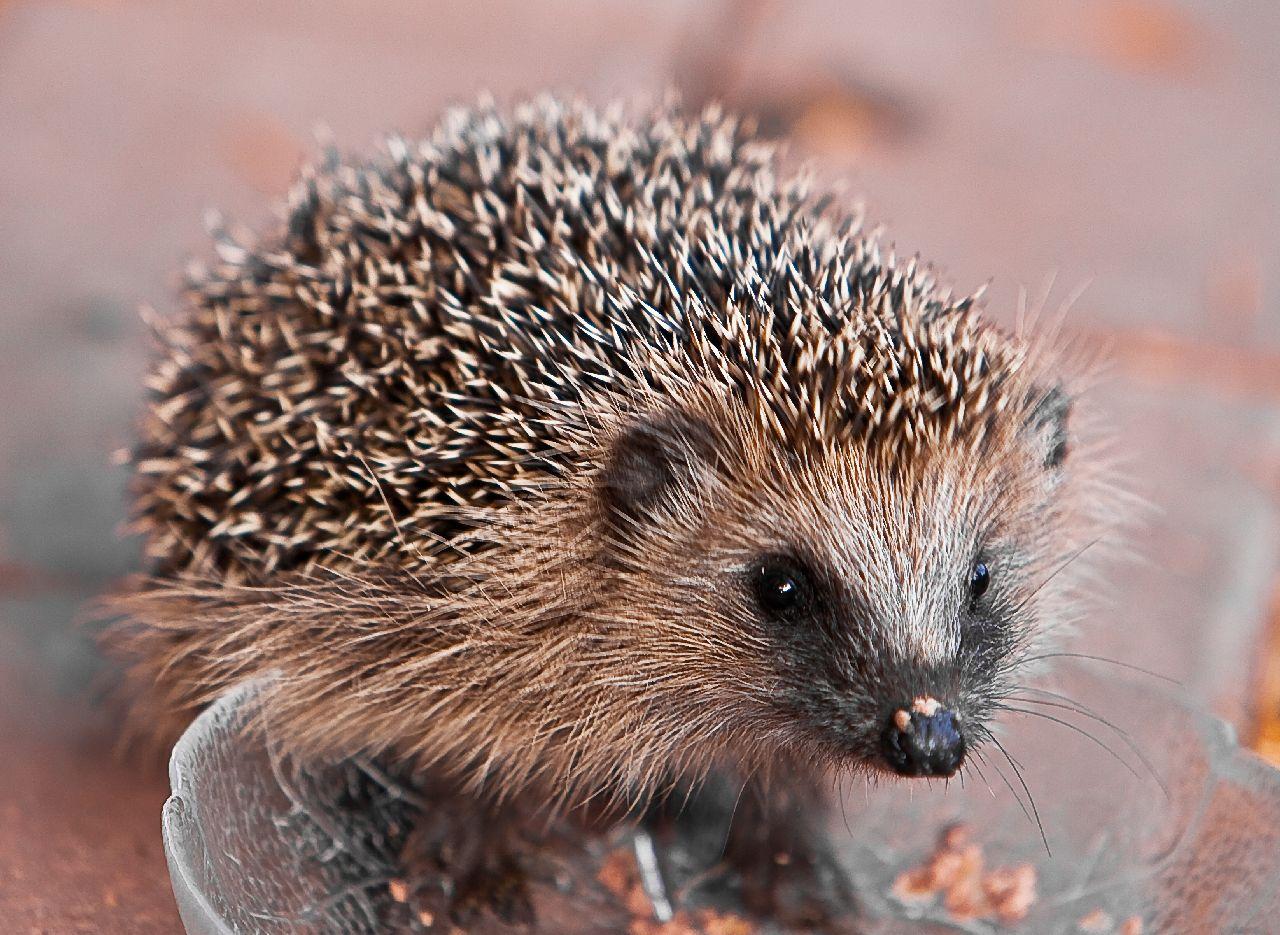 Экзотические животные в доме: млекопитающие - фото №1