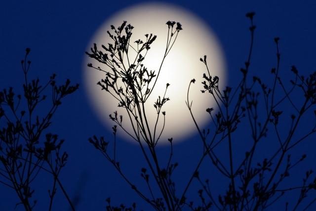 стрижка по лунным дням