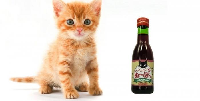 Мяу-мяу нового урожая: выпить вина теперь можно на пару с котом - фото №1