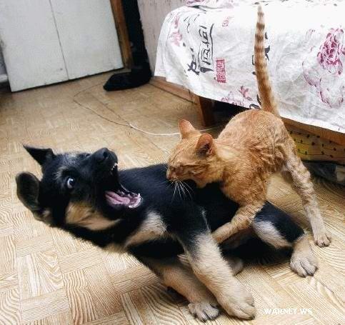 Витамины для кошек и собак: нужны ли они? - фото №1